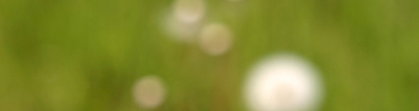 A blurred image of a green field with four or five dandelions in seed.  The blur simplifies the image and makes it timeless - as does abstraction.  The technique is called Focuso and is an image by ZIM Founder, Dan Zen - otherwise known as Dr Abstract.  But... when he is a photographer, his name is Hollander Maui.